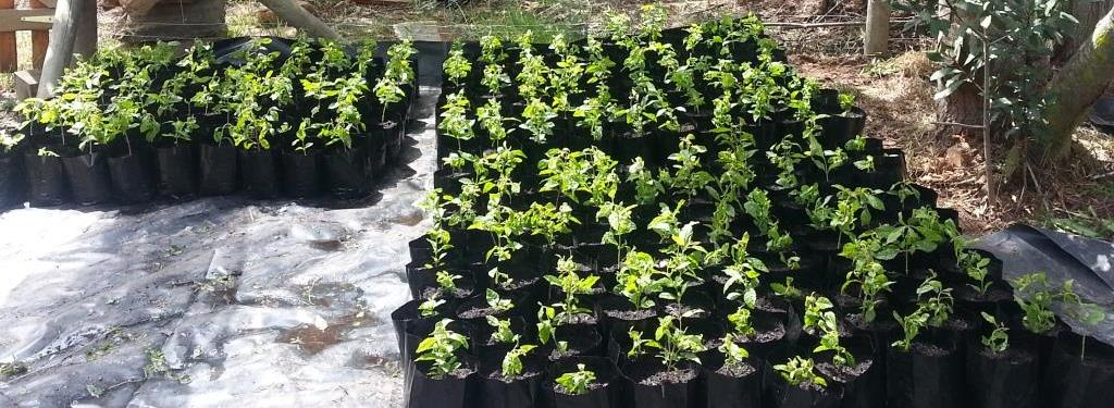 mini satellite nurseries - about precious tree project