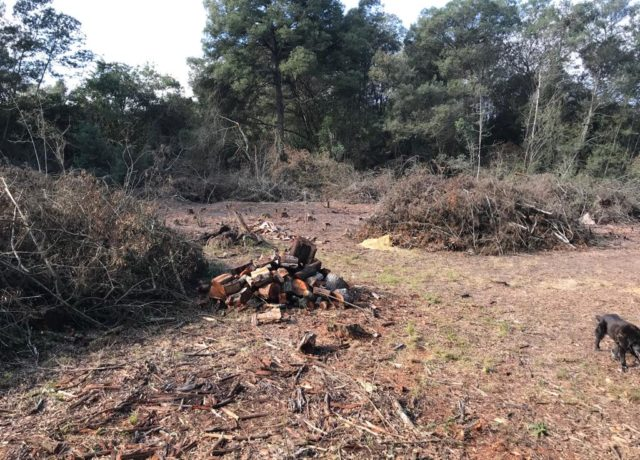 Hoogekraal Farm - Clearing and Biomass Control Programme - Precious Tree Project
