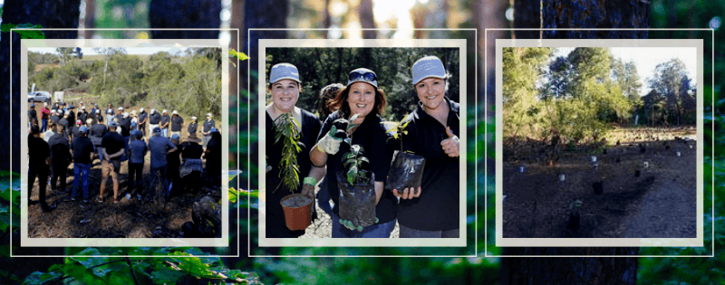 Arbor Month: Oakhurst Insurance growing a Corporate Forest