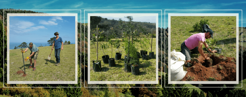 Precious Tree Project NPO - Indigenous Reforestation Projects and Programs Garden Route South Africa