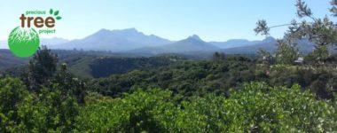 Volunteer Tree Planting - Botanical Gardens, George - Precious Tree Project