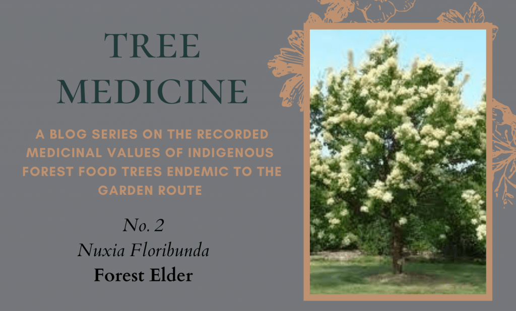 Tree Medicines of the Garden Route: Forest Elder