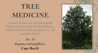 Tree Medicines of the Garden Route - Cape Beech - Precious Tree Project NPO