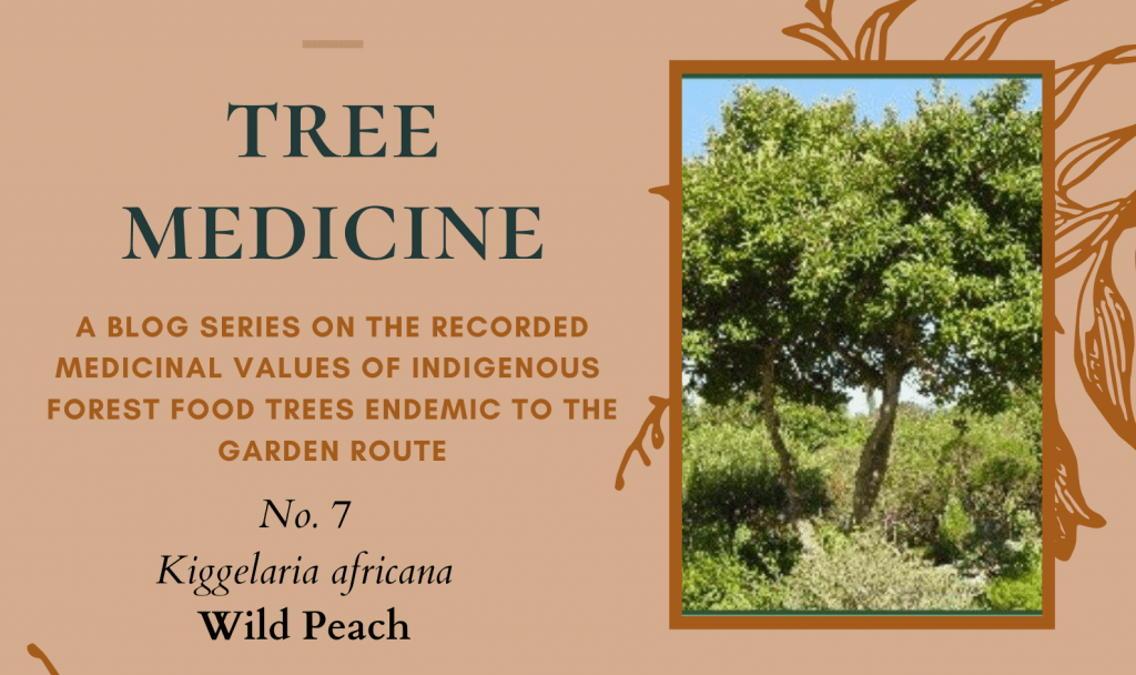 Tree Medicines of the Garden Route: Wild Peach