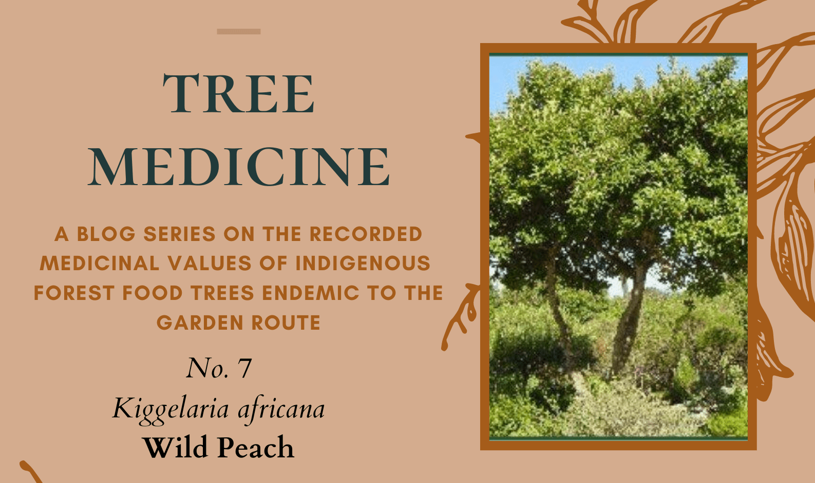 Tree Medicines of the Garden Route - Wild Peach - Precious Tree Project NPO