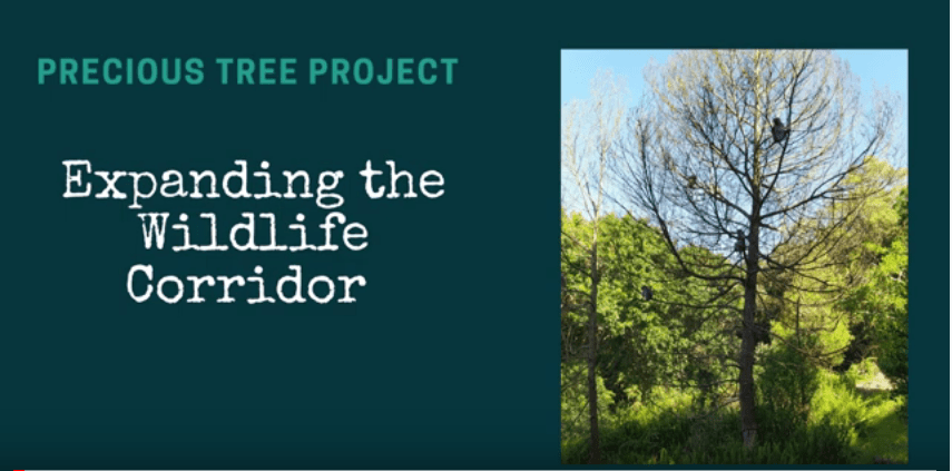PTP Shamboh Wildlife Corridor - Expanding the Wildlife Corridors