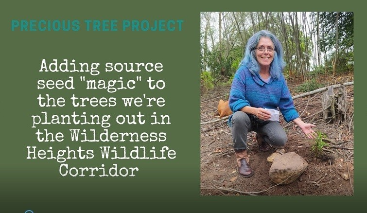 Introducing a different Element into the Wildlife Corridor -source seeds - Precious Tree Project