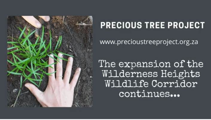 clear plant repeat wilderness heights precious tree project