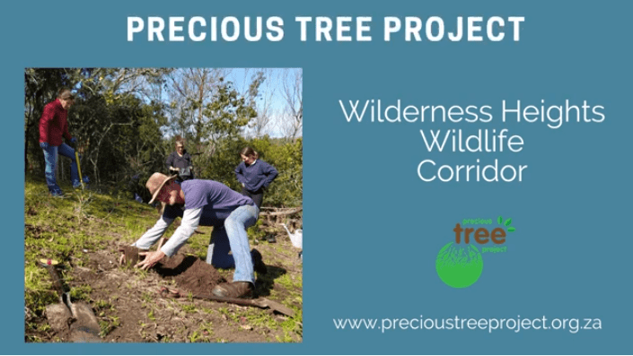 Choosing Green to Honour Purple BTS Precious Tree Project